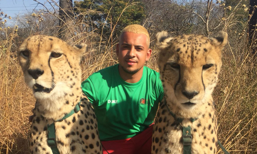 Duke and cheetahs