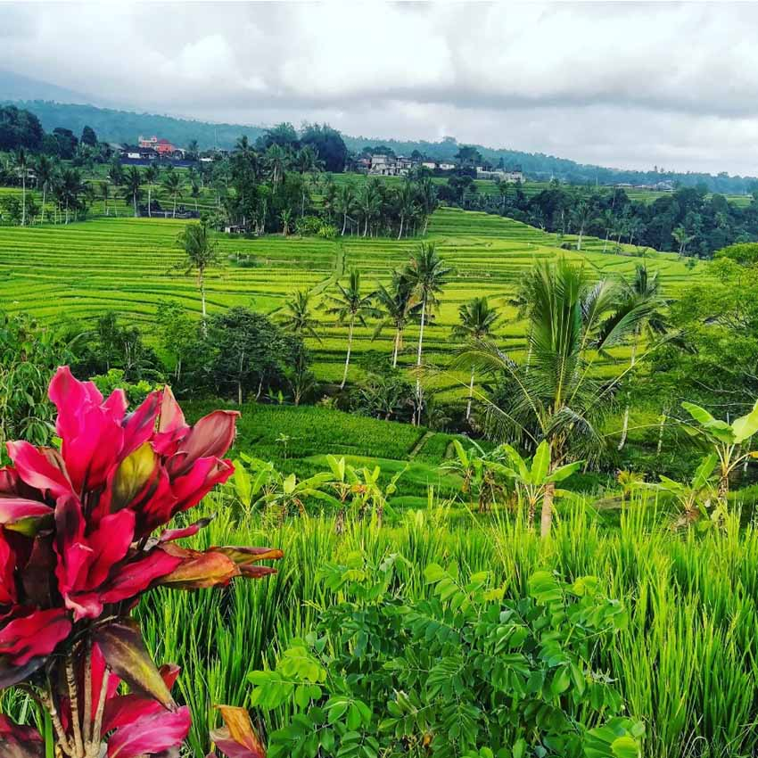 The landscape of the Jatiluwih rice terraces in Bali